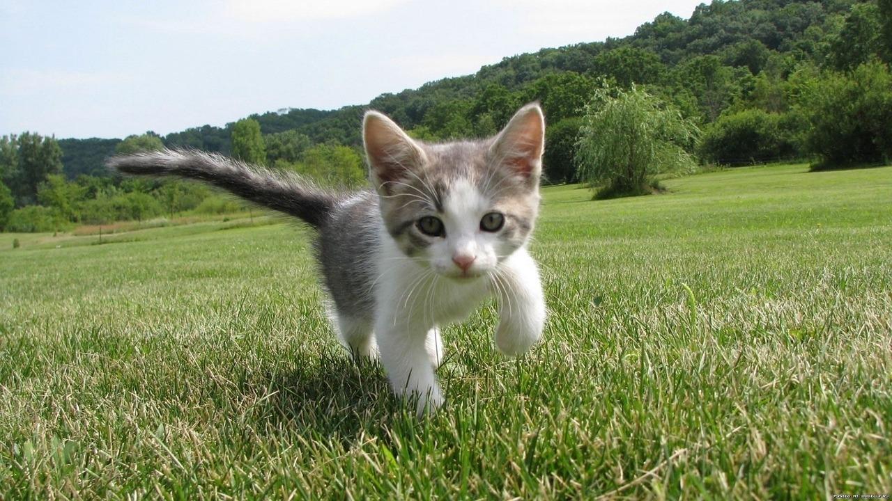 Idée cadeau : un animal vaut mieux qu'un objet !
