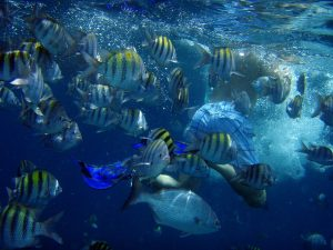 diving-26017_960_720