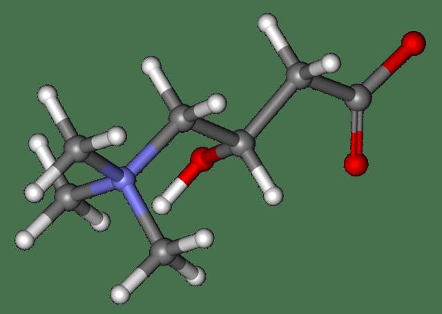lcarnitine et acide aminé