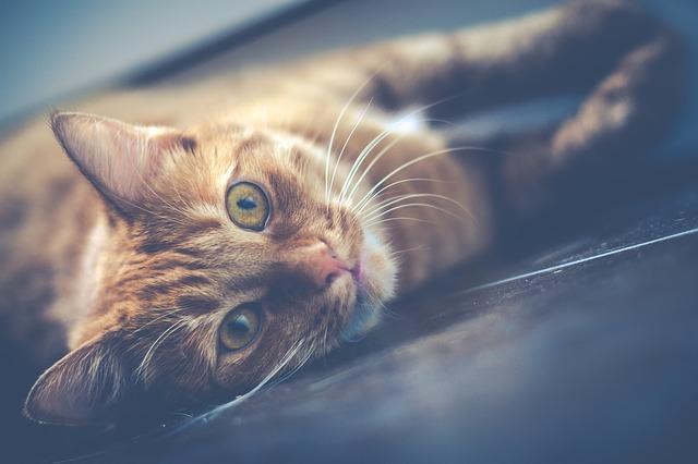 Nos conseils pour rendre heureux votre animal de compagnie