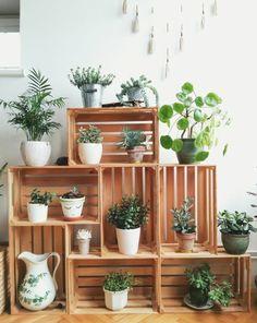 étagère faite avec des cagettes en bois sur laquelle sont posées des plantes