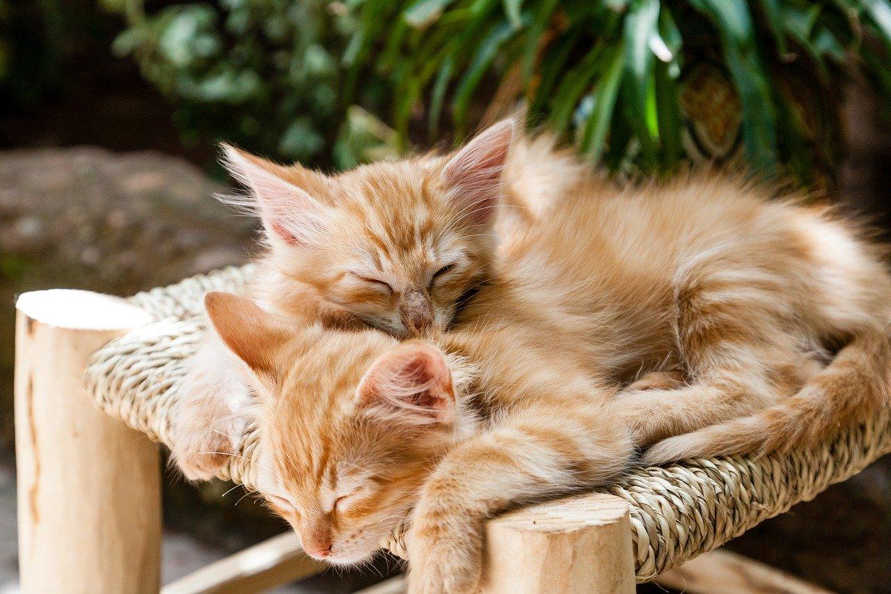 deux chatons endormis sur un tabouret
